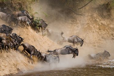 Wildebeest migration, Serengeti
