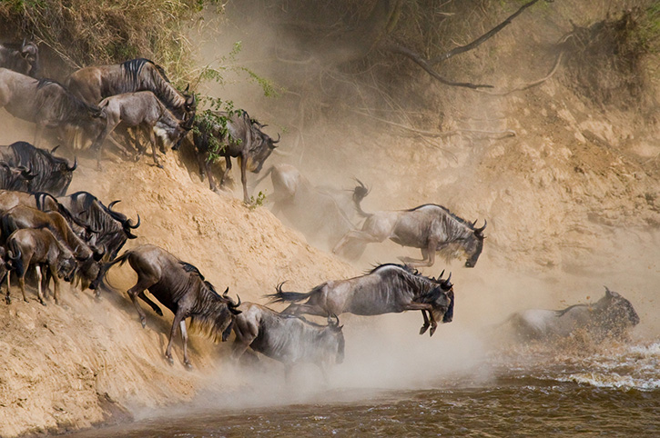 Tanzania Serengeti wildebeest migration