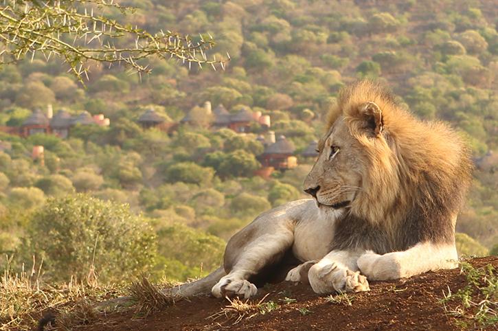 Thanda Private Reserve