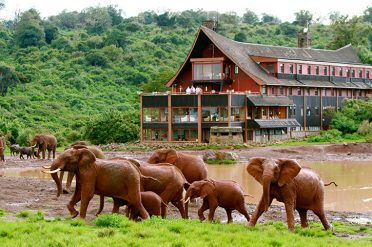 Elephants at The Ark Lodge