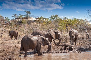 Water Hole, The Elephant Camp