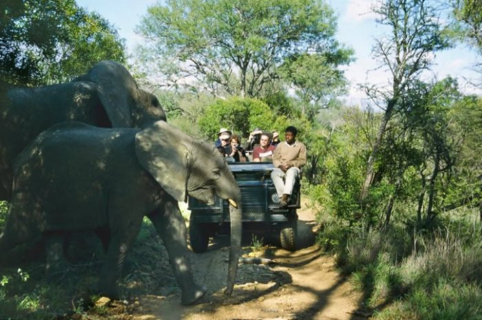 Thornybush Game Reserve Game Drive