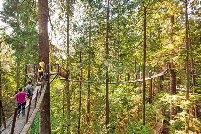 Treetops Adventure, Capilano Suspension Bridge Park
