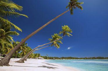 Tropical Palms In Fiji