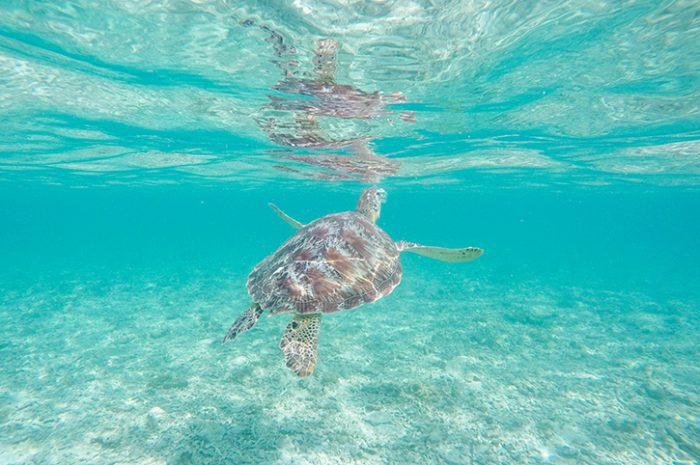 Turtle, Gili Trawangan