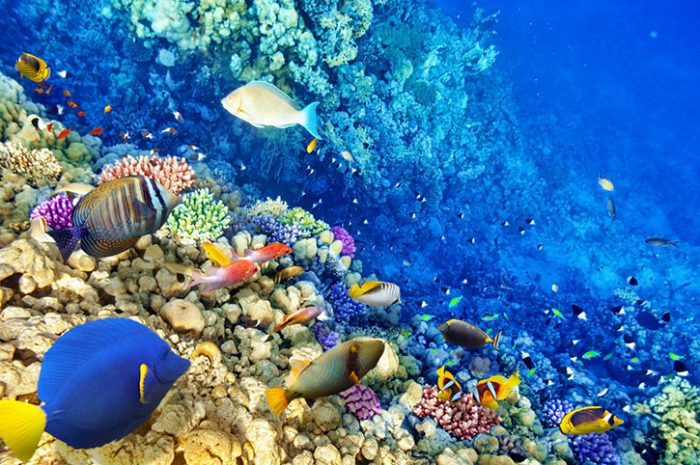 Coral reef, Mauritius