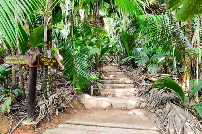 Vallee De Mai Nature Reserve, Seychelles