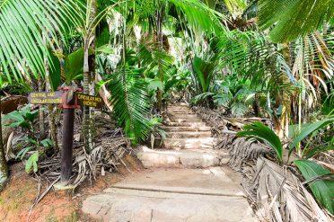 Vallee De Mai Paths, Seychelles