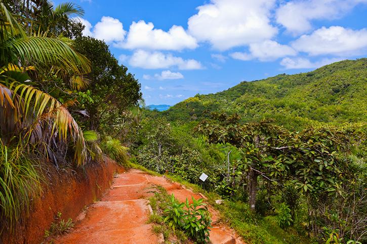 Vallee De Mai, Seychelles