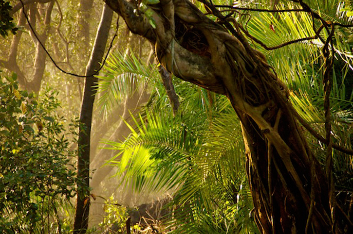Rainforest, Victoria Falls