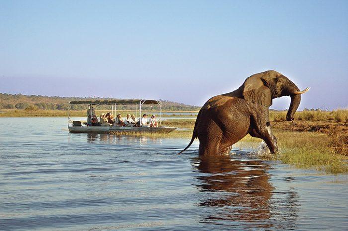 Elephant, Chobe National Park
