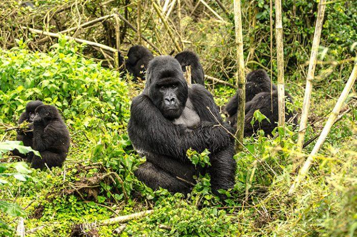 Volcanoes National Park, Rwanda