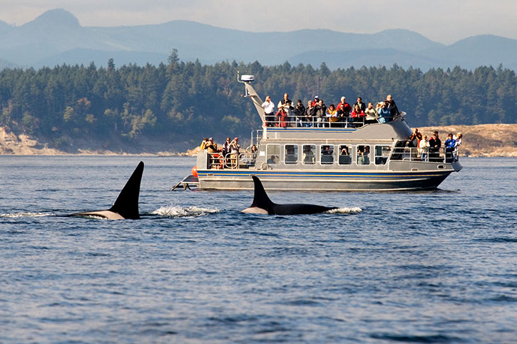 Watching Orca Whales, Canada