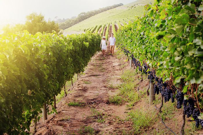 Couple Walking Through Vineyards