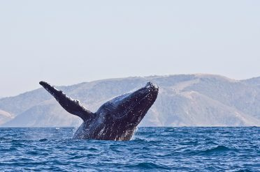 Whale, South Africa