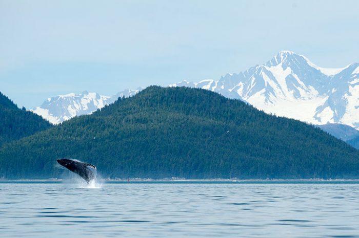 Whale Watching, Alaska