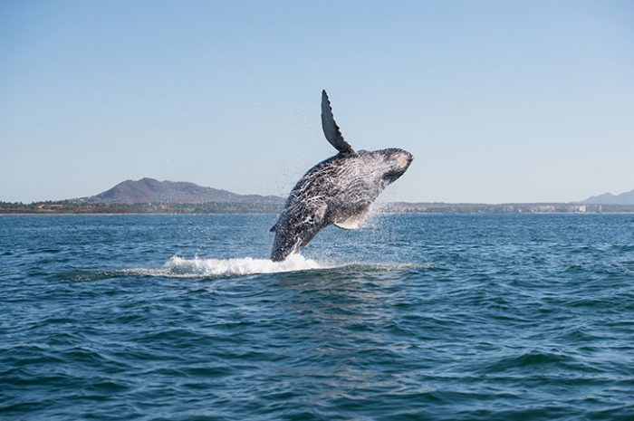 Whale Watching In Ucluelet, Canada
