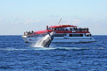 Whale Watching Near Sydney
