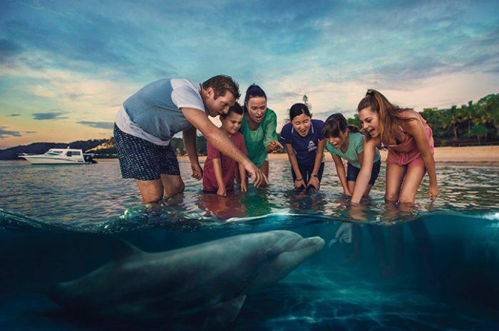 Wild Dolphin Feeding Tangalooma Island Moreton Island