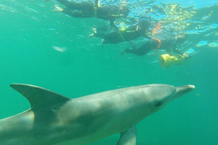 Wild Dolphins