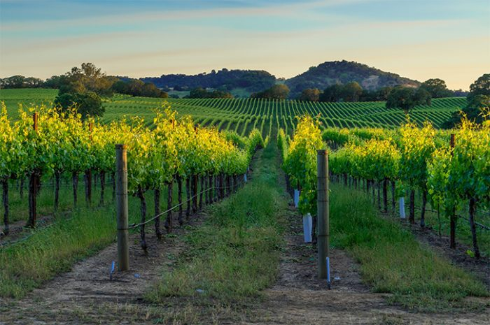 Wine Country, California