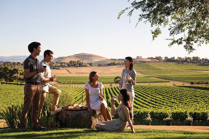 Yarra Valley Winery