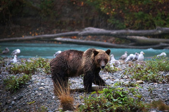 Young Bear, Canada