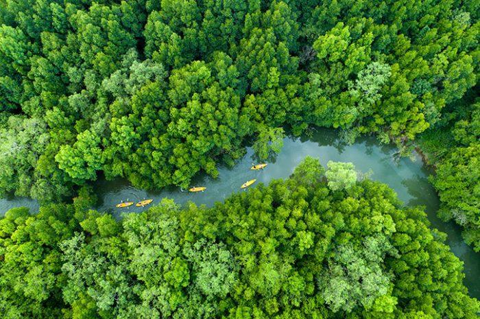 Canoeing through the mangroves, Khao Sok National Park