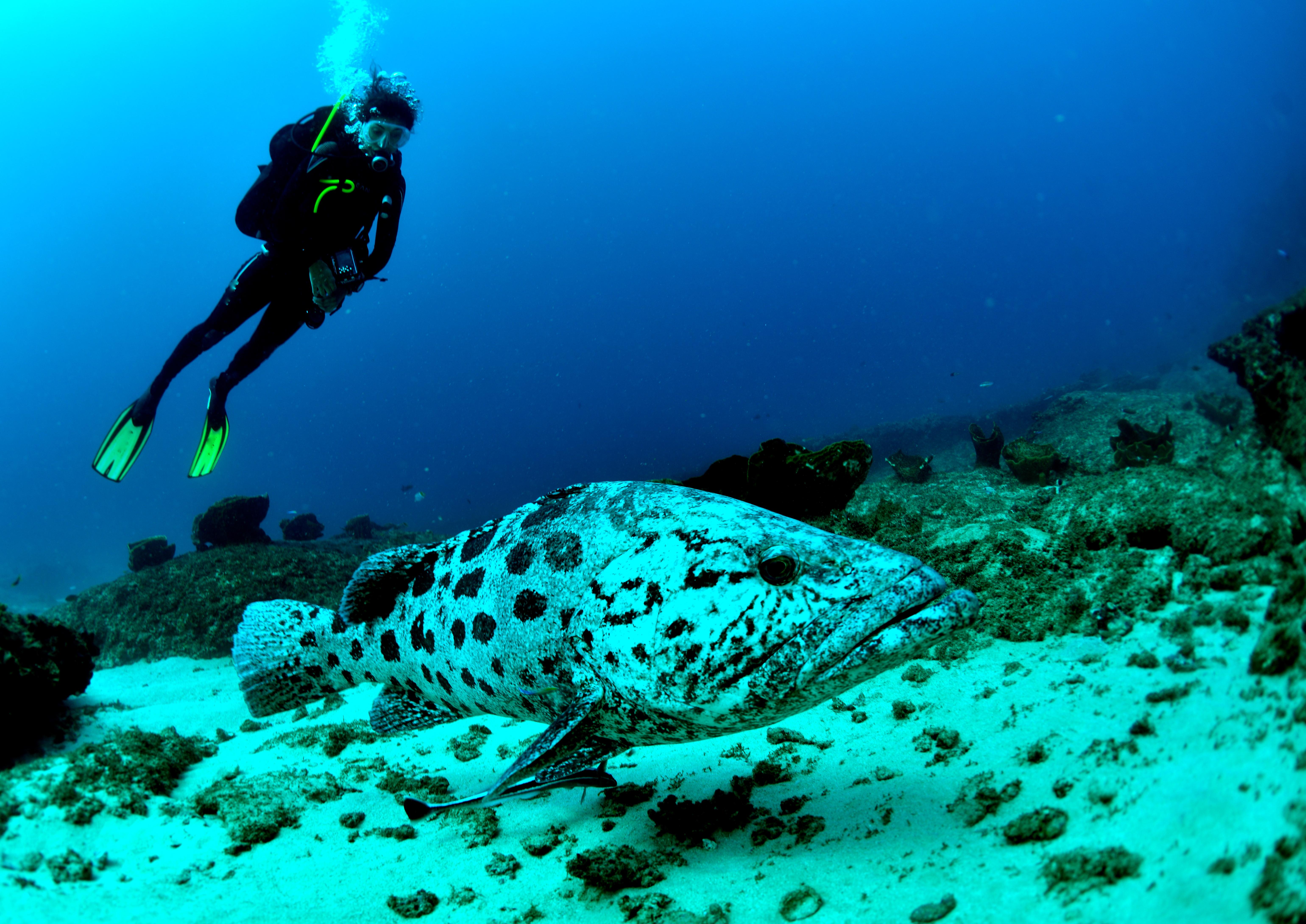 Mozambique Diver